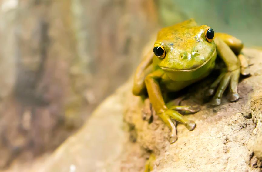 Unsplash Frog