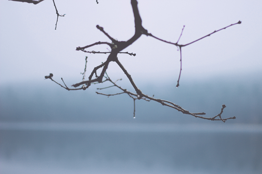 Unsplash Rainy Tree